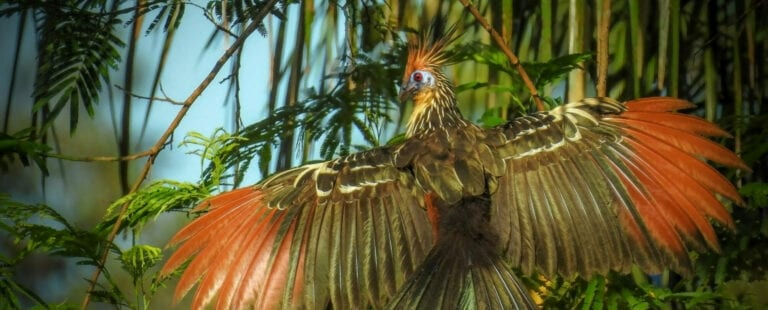 vogel met gespreide vleugels